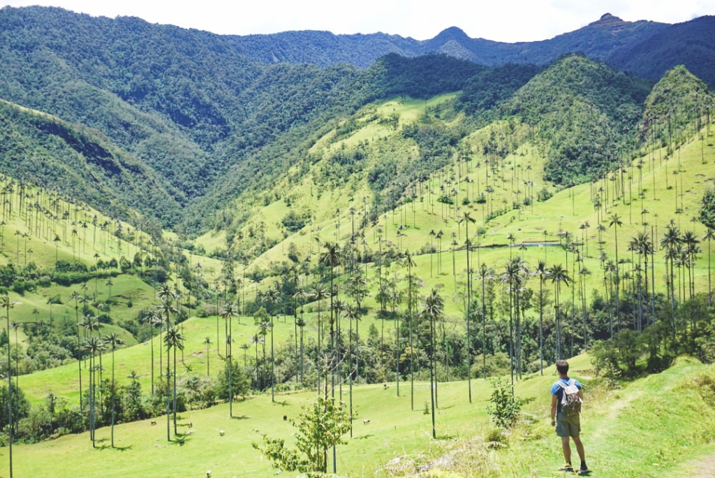 Hiking the Valle de Cocora Colombia |