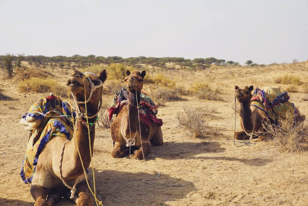 3 Days in Jaisalmer, India + Camel Safari in The Thar Desert