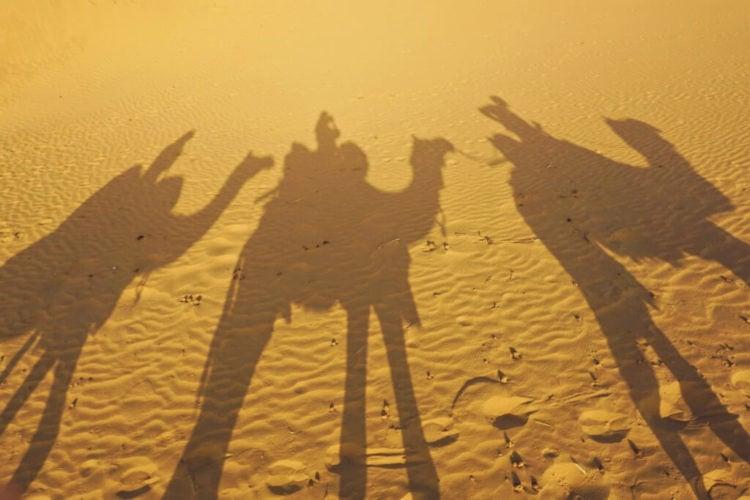 Camel Ride in the Thar Desert | photograpy camel safari