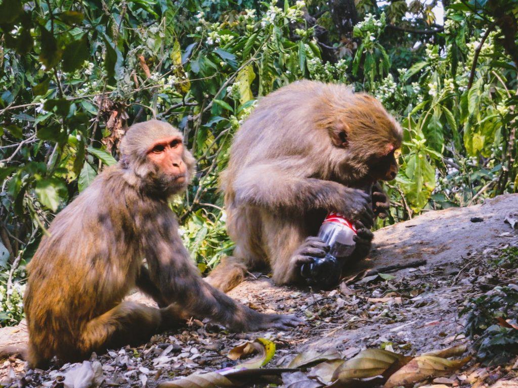 Swayambunath Monkey Temple is one of the top things to do in Kathmandu Nepal | Bucketlist Bri