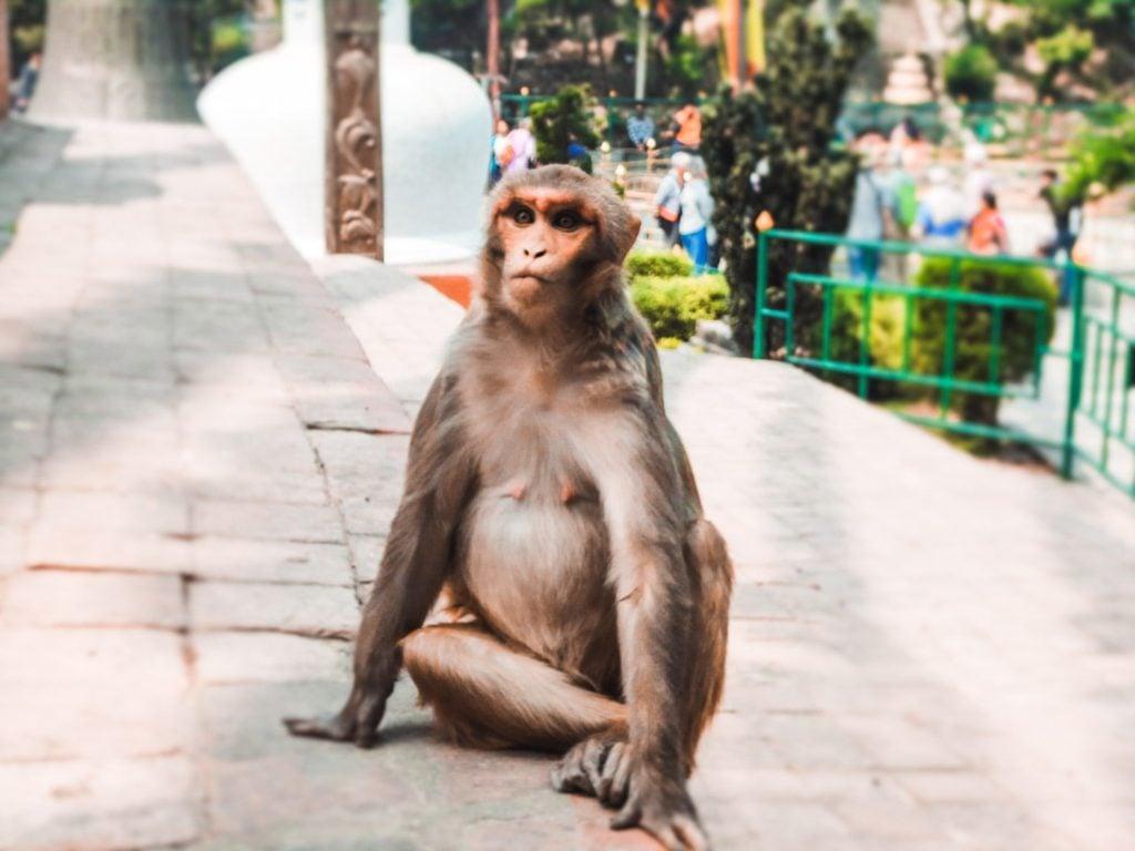 Swayambu Monkey Temple