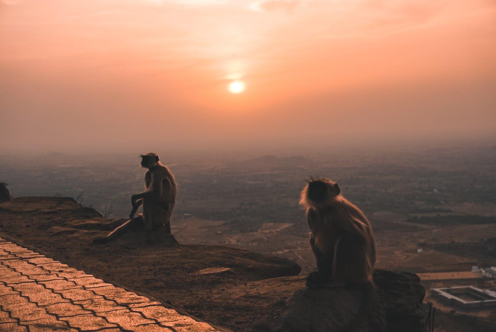 Pushkar, India | Savitri Mata Temple | 2 Weeks in Rajasthan