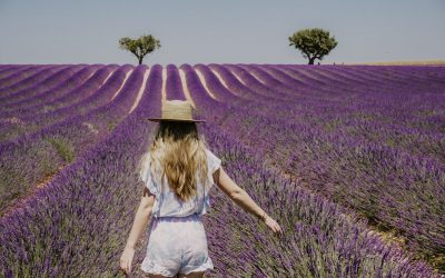 Visitor's Guide to the Provence Lavender Fields in Valensole, France