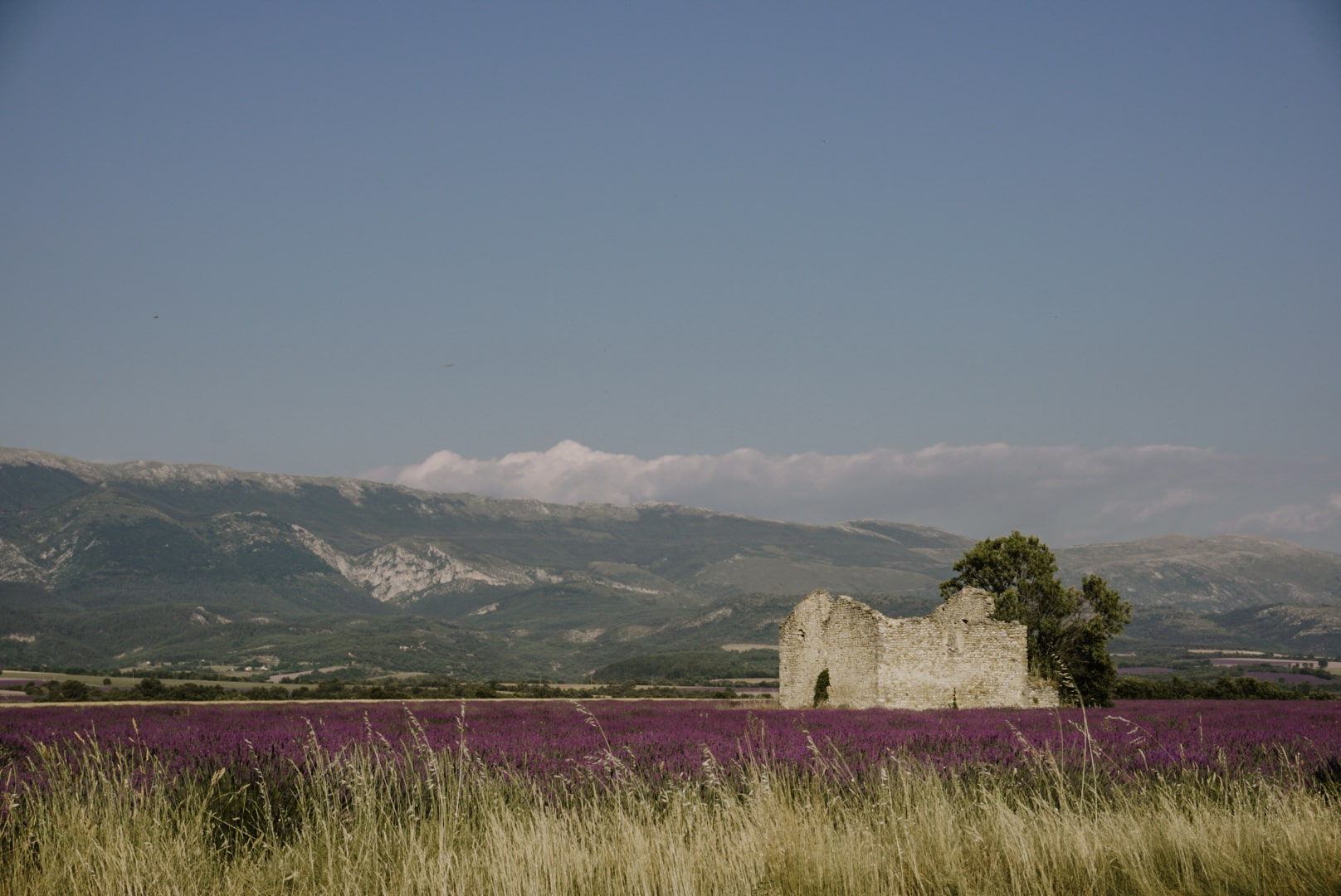 provence lavender fields france