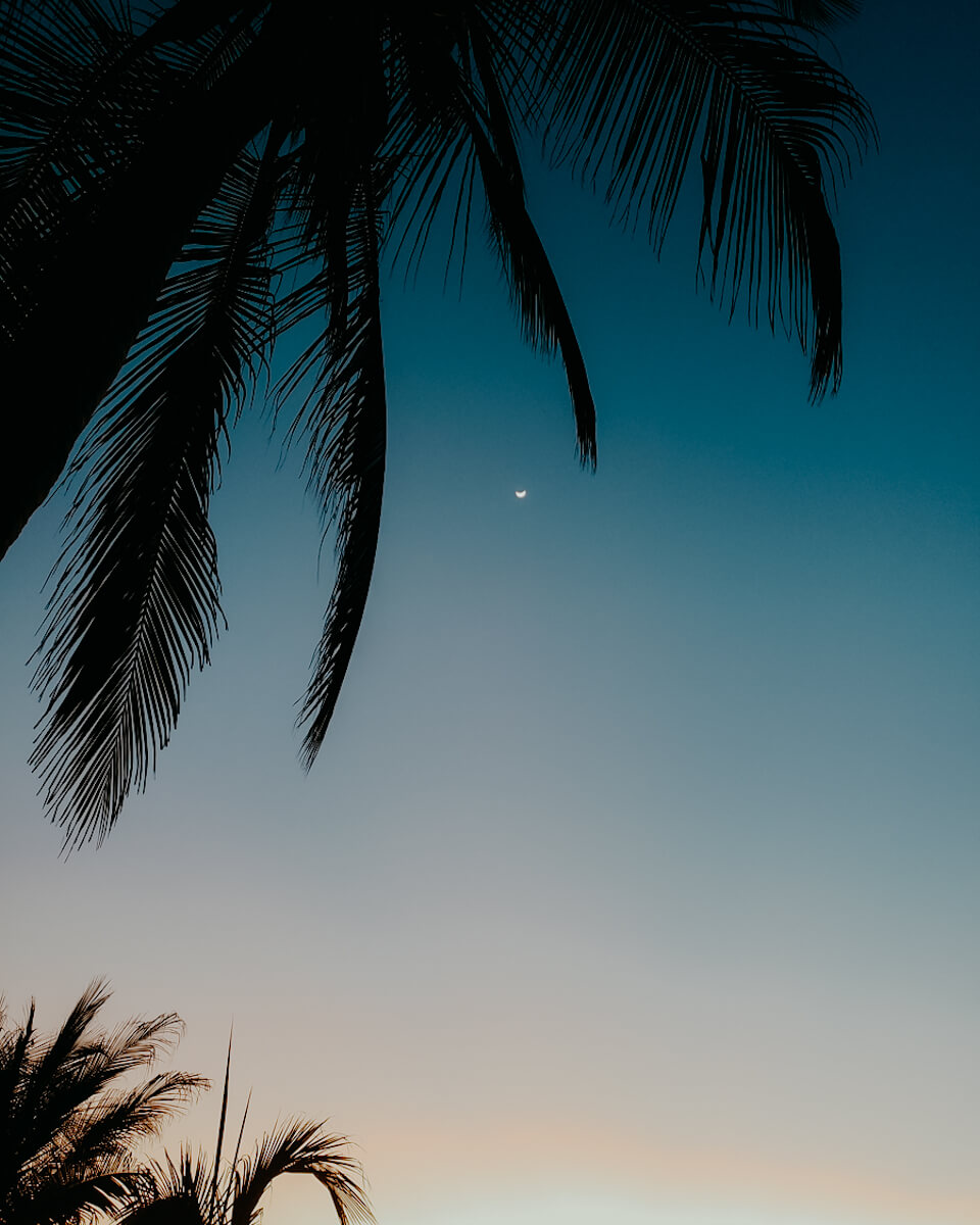 palm trees and night sky with moon