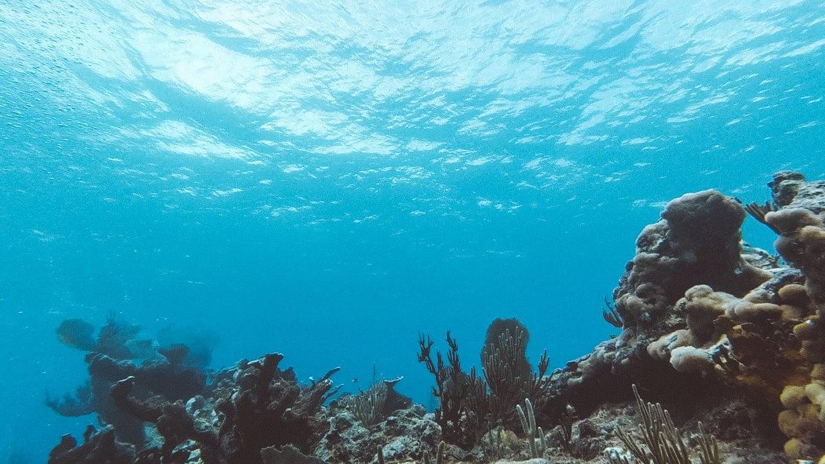 reef diving tulum