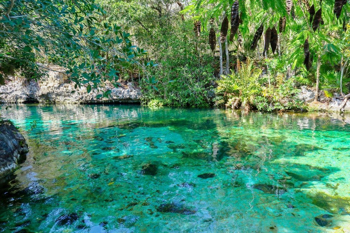 cenote jardin del eden near playa del carmen