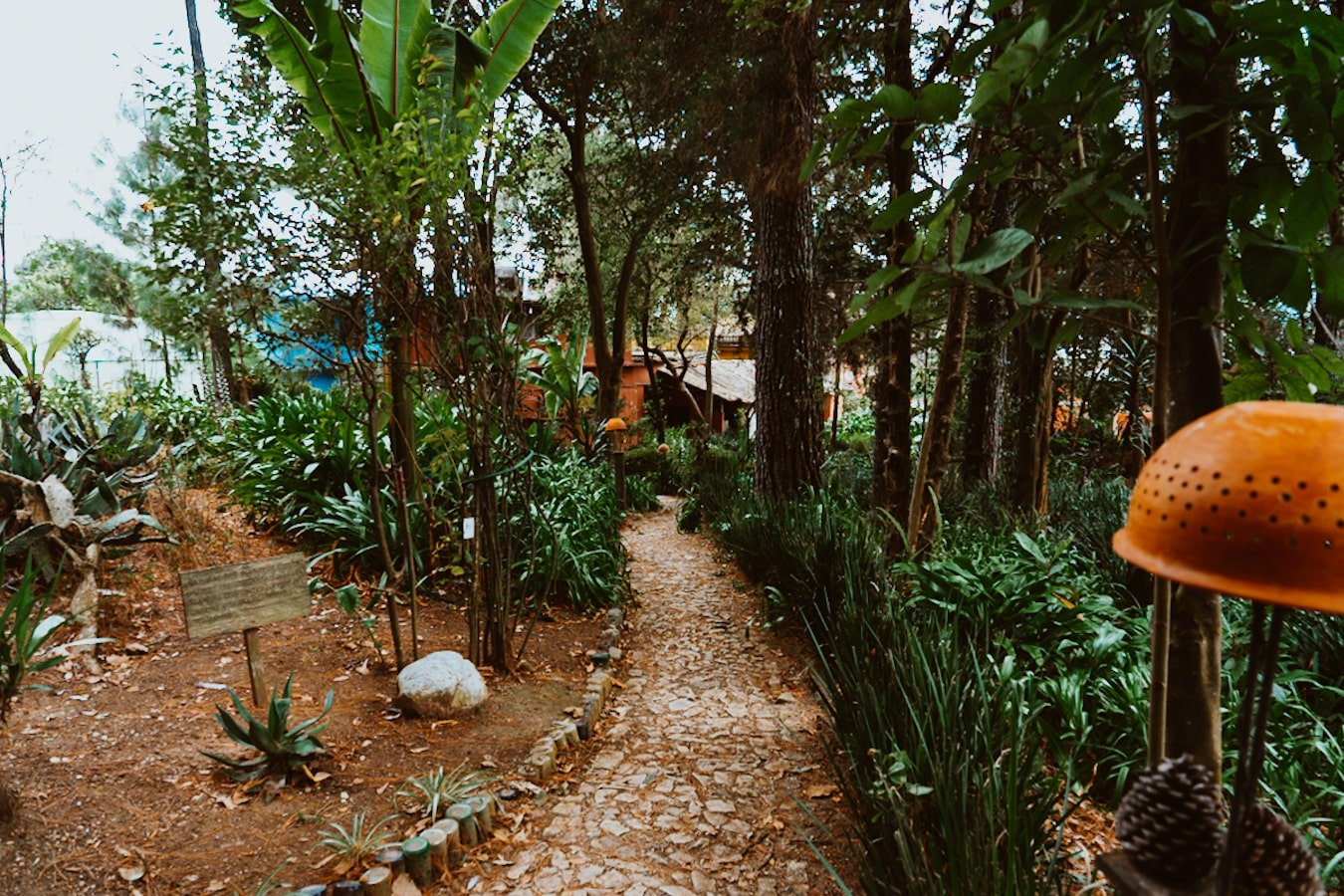 jungly Na Bolom Garden with stone pathway
